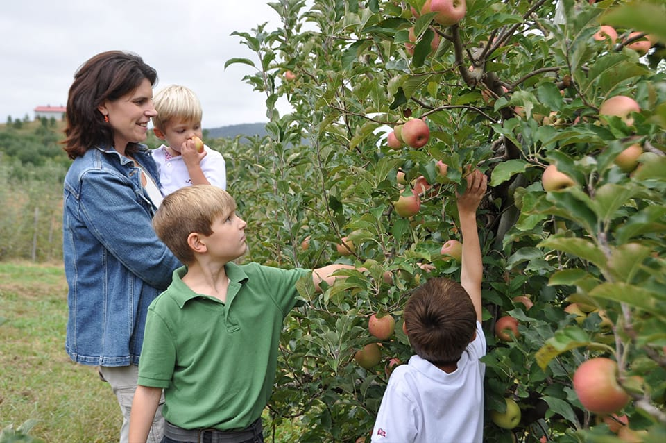 Picking Apples at Mercier Orchards