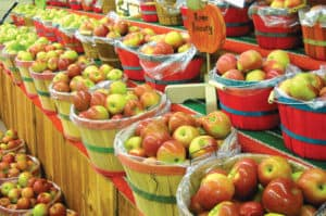 Georgia Mountain Parkway - Apples ready for market at a North Georgia apple house