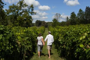 Georgia Mountain Parkway - The vineyards at Cartecay make a wonderful place for a stroll in Ellijay, Georgia