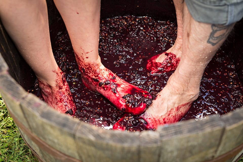 Georgia Mountain Parkway - Grape stomping can get messy at Cartecay Vineyards in Ellijay, Georgia