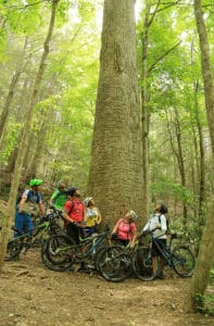 mountain bikers in forest in gilmer county, ga