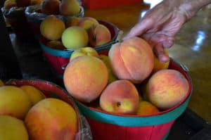 basket of peaches in gilmer county, ga