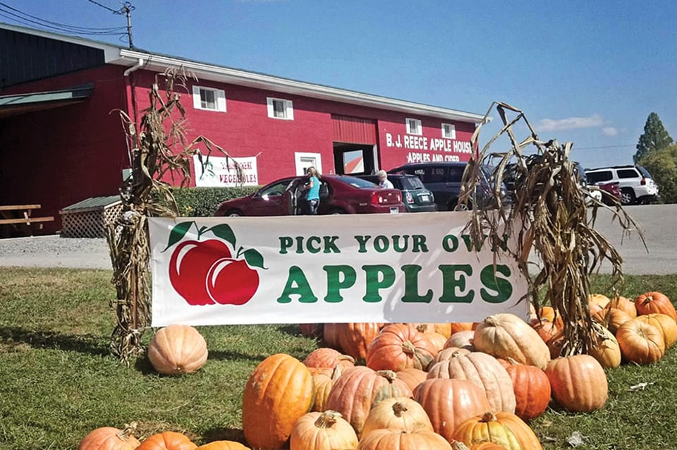 Georgia Mountain Parkway - Pick your own apples — and pumpkins! — at BJ Reece Apple House in Ellijay, Georgia