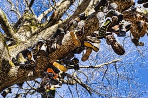 Georgia Mountain Parkway - Discarded hiking boots adorn a tree at Walasi-Yi in Blairsville, Georgia