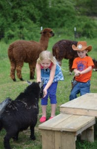 Georgia Mountain Parkway - Kids feeding goats and llamas at Horse Creek Stables in McCaysville, Georgia